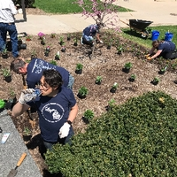 Volunteers planting more flowers